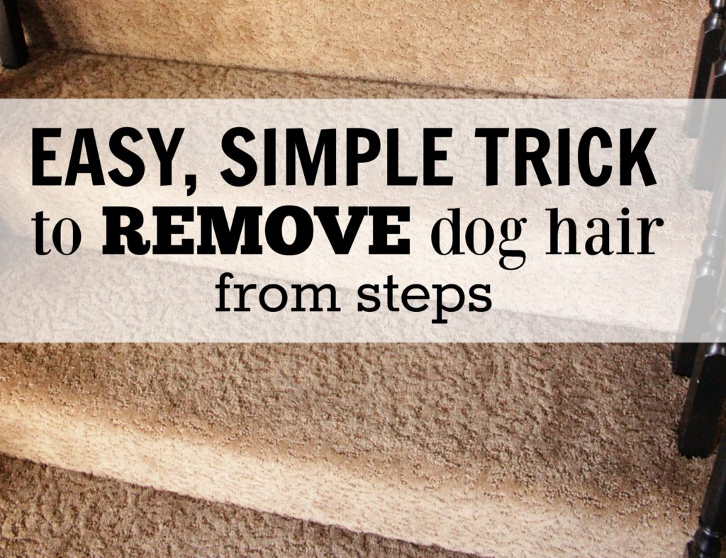 How To Easy Dog Hair Removal From Couch Stairs And More