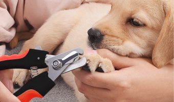 Professional Stainless Steel Dog Nail Clippers $6.49 (reg. $9.99)