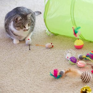 20ct Cat Toy Assortment + Tunnel