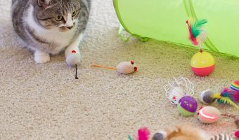 20ct Cat Toy Assortment + Tunnel $12.99 (reg. $16.98)