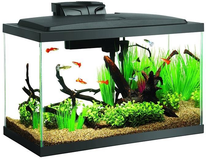 Aqueon 10gal. Aquarium Starter Kit