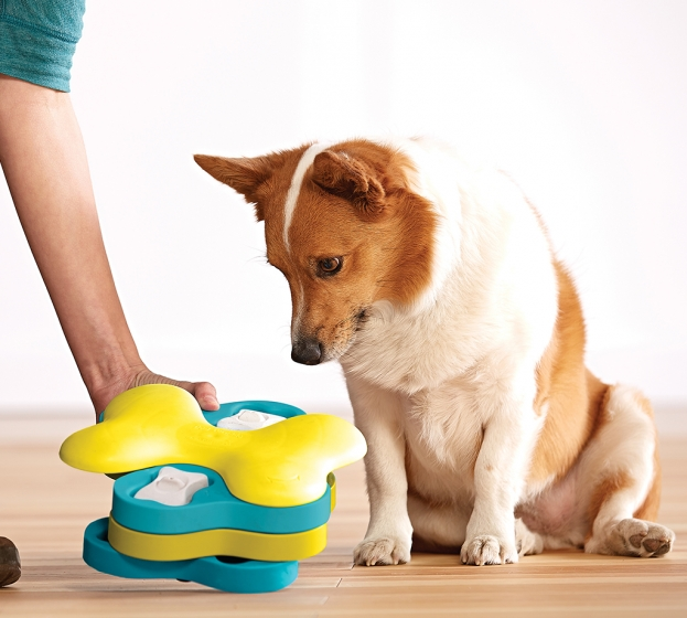 Interactive Dog and Cat Toys