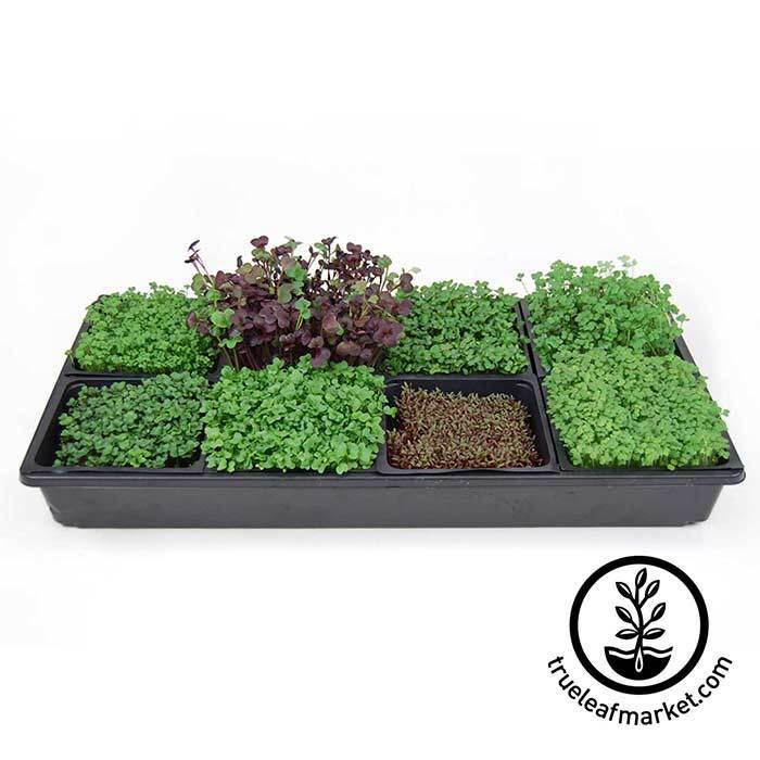 sectioned microgreens kit for indoor microgreen gardening